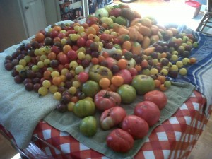 This is part of one day's harvest from Heart & Sole Gardens in August, 2012.
