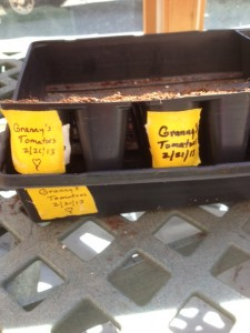 Trays labeled for Granny's seeds.