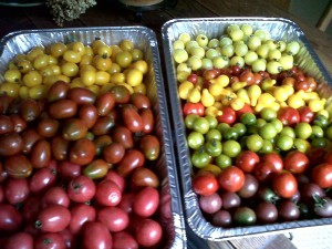 Some of last year's tomato harvest.