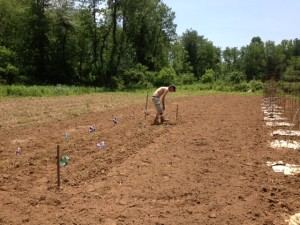 Richard places pinwheels among the Hopi corn rows.