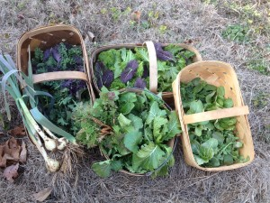 The December 31, 2013, harvest from Heart & Sole Gardens