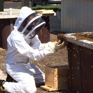 During Easter brunch service, Heirloom Restaurant's chef owner and beekeeper, Clark Barlowe, scoops bees into a new home.