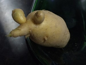 An example of LaRatte fingerling, aptly named