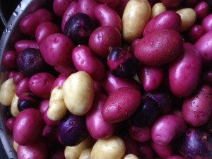 Colorful potatoes are delicious and beautiful